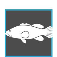 Soluciones para la acuicultura y agroindustria for Granja de peces